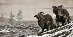 El período maastritchtiense del cretácico superior fue al parecer bastante frío en la región que hoy se conoce como Alaska. Por eso Mark Witton presenta a esta pareja de Pachyrhinosaurus perotorum bien protegidos del frío.