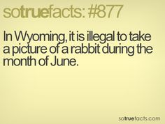 In Wyoming, it is illegal to take a picture of a rabbit during the month of June. Wtf Fun Facts, True Facts, Funny Facts, Random Facts, Movie Facts, In Laws Humor, American Cartoons, Calming Music, Catholic Priest