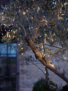 Wind outdoor fairy lights around garden trees and bushes for a magical effect.