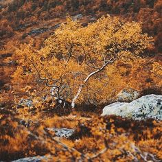 In every walk with Nature one receives far more than he seeks. - John Muir | PC: @konstalinkola  ten trees are planted for every item purchased: http://ift.tt/1gvwPkT  #nature #natureblog #inspiration #inspire #inspiring #earth #explore #outdoors #environmental #Environment #enviro #trave #naturelover #naturelovers #natureonly #natureseekers #natureporn #earthporn #naturehippys #hippy #naturewalk #photograpghy #cleanair #naturephoto #naturephotography #02 #natureshooters #naturevalley…