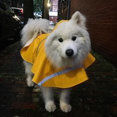 Thank goodness we postponed my 12th Birthday Fundraiser Pawty - there was SOOO much rain today!!!  Countdown until Pawty Day: 7 days!  http://ift.tt/1zDCnm1 #HarvardTurns12 #PawtyAnimal