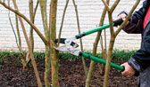 pruning in spring ~ dividing perennials ....excellent videos on how to divide them....