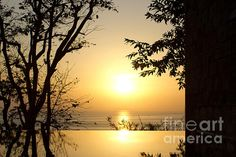 #FRAMED #GOLDEN #SUNSET #Silhouette #Photography Quality Prints and Cards at: http://kaye-menner.artistwebsites.com/featured/framed-golden-sunset-kaye-menner.html  -