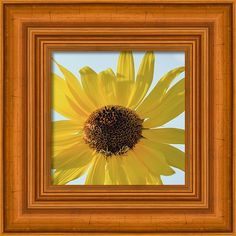 Bloom Framed Print featuring the photograph Sunflower And Bees - Square Format by Debra Martz