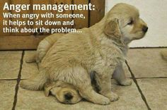 Photo: Dogs teaching people to cope: it's a beautiful thing.  :)