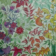 Flores ventos livro de colorir, Johanna Basford, jardim secreto e floresta encantada