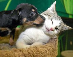 Convivencia y tolerancia entre el perro y el gato | Cuidar de tu perro es facilisimo.com