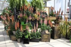 Garden center plant yards tend to be a horizontal plane of green plants. Take a look at these creative ways to add drama to your store and see what might work for you. After you finish looking at the slideshow, take the time to visit a good visual merchandising page on Pinterest, hosted by a woman named Kate Field. She found some easily adaptable ideas I think you'll enjoy.