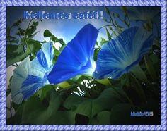 Beautiful morning glories - Flowers Wallpaper ID 748519 - Desktop Nexus Nature Spring Blooms, Spring Flowers, Pretty Flowers, Blue Flowers, Morning Glory Flowers, Lilies Of The Field, Texas Gardening, My Secret Garden, Blue Hydrangea
