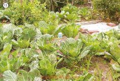 13. vegetable garden Garden Hose, Garden Tools, Picture Dictionary, Yard Waste, Grass Seed, Gardening Gloves, Flower Beds, Hedges, Daffodils