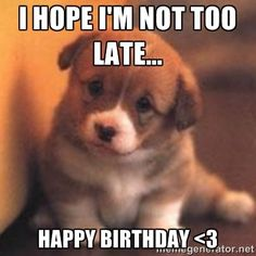 Cute Happy Birthday Meme   Funny Dogs Pictures