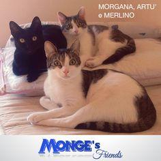 Morgana, Artù e Merlino #Mongesfriends