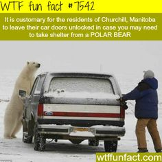 In this place, the residents always leave their cars unlocked… - WTF fun facts