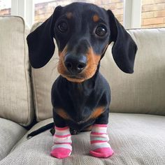 """""""Now only my back feet are freezing."""" ❄️ #SockSunday #TinySocks #WienerDogWorld  • Photo  @martha_dachshund • TAG us in for a chance to be featured ✌️"""
