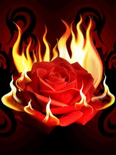 Flaming Red Rose love flowers fire animated rose burn flame gif red rose