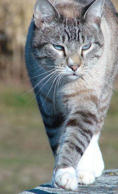 Kitty On A Rail