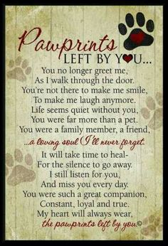 For my sweet Daisy Red Ryder and her sisters that are meeting her for the first time.  Rest, sweet Daisy, rest.