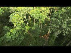 C'est pas sorcier - la Forêt du congo : sur la piste des bois tropicaux