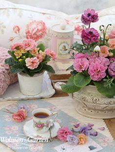 Plausch am Nachmittag –Die tägliche Tasse Tee wird beim Anblick der kleinen Primeln zum Fest. Unter den gefüllten gibt es so verführerische Sorten wie 'Guernsey Cream', 'Miel' und 'Sundae', die köstliche Assoziationen wecken. (Foto: Susanne Grüters)