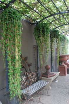 Great use of vertical space and appropriate plants