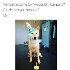 dogsbeingbasicbday