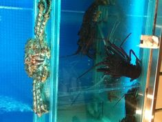Giant Alaskan Crab @ No Signboard Seafood, Food Street, Causeway Bay, Hong Kong. It's humble beginning started in Singapore