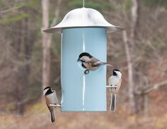 J Schatz Bistro Bird Feeders