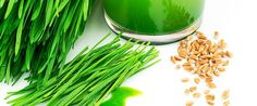 Step-by-Step Guide To Growing/Sprouting Your Own Wheatgrass - Juicing For Health Health And Beauty Tips, Health And Wellness, Health Tips, Healthy Drinks, Healthy Snacks, Growing Wheat Grass, Growing Sprouts, Juicing Benefits, Juicing For Health