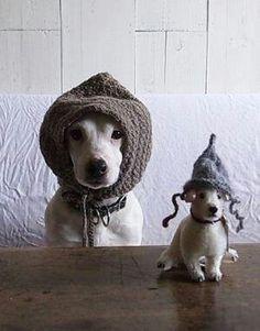 Perros con gorro de lana