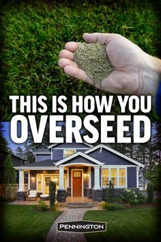 How to Overseed or Reseed Your Lawn There's a secret behind achieving a beautiful, lush lawn. Whether you're tending your lawn for the first time or have years of experience, overseeding can improve your results. Home Landscaping, Front Yard Landscaping, Inexpensive Landscaping, Lawn And Landscape, Landscape Design, Landscape Architecture, Garden Design, Yard Maintenance, Lawn Care Tips