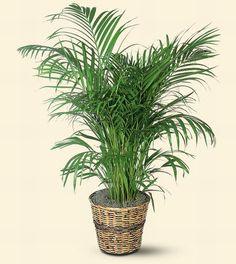Indoor Plants For Sale Sri Lanka on georgia indoor plants, singapore indoor plants, philippine indoor plants,