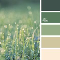 """dusty"" green, beige, color of germs, color of greenery, contrasting colors, cream, dark green, gentle green, green, light green, pastel green, shades of beige, shades of green, tranquil shades of green."