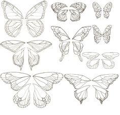 butterfly or fairy wings