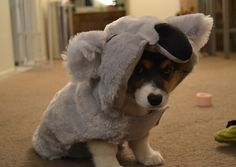 "They are masters at the ""koala impression."" 