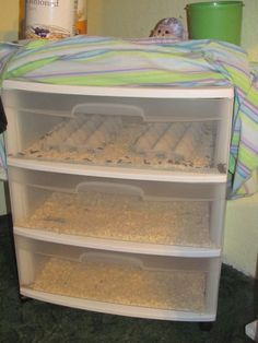 how to breed mealworms - best set up I've seen