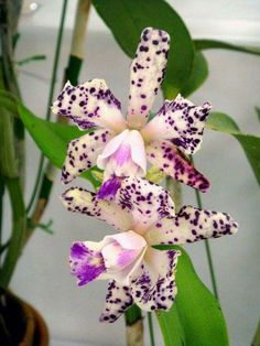 Amazing Unusual Plants To Grow In Your Garden Unusual Flowers, Wonderful Flowers, Unusual Plants, Rare Flowers, Beautiful Flowers, Orchids Garden, Orchid Plants, Orchid Varieties, Orquideas Cymbidium