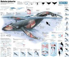 Awesome infographic in Brazilian newspaper - Estadao.com.br