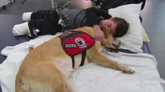 Therapy dogs help heal injured service members