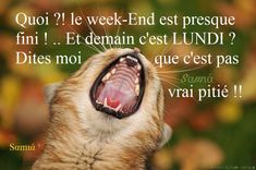 Le week-end est presque fini. Bon Weekend, Days And Months, Cat Health, Week End, Say Hello, Good Morning, Me Quotes, Haha, Facebook