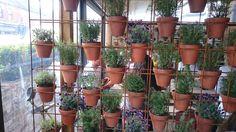 Iron Rails for holding Plant Pots