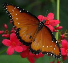 Image result for imagenes de bellas mariposas