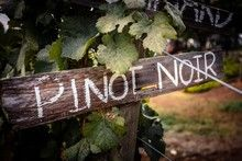August 18th encourages adults to explore a glass of Pinot Noir. If you like it enjoy the bottle no judgement here. Please drink responsibly... Pinot Noir, Perspective, 18th, Encouragement, Wine, Holidays, Explore, Bottle, Glass