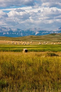Hay bales in Montana by Janice Nolan Braud ( my home state) Montana Living, Big Sky Montana, Montana Ranch, Montana Homes, Laramie Wyoming, Cody Wyoming, Cheyenne Wyoming, Wyoming Cowboys, Paisajes