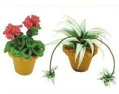 How to: Miniature geranium and spider plant.