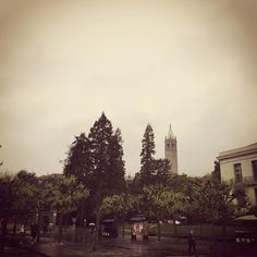 #berkeley #eastbay #bayarea #rainyday by cez027