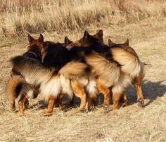#German #Shepherds party