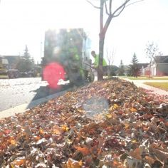 """Our fall clean up schedule is filling fast. You'll want to get on the schedule soon to ensure you can be completed before the snow flies. That's right! I said the """"s"""" word! Spring and Fall Clean Up Services - Greenscapes Madison, Wi - http://www.greenscapesmadison.com/services/full-service-lawn-maintenance/springfall-clean-up/#utm_sguid=146722,9ad8c391-474c-f471-d08f-9ab1403cb524"""