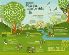 dia internacional del bosque infografia - Google Search Forests, Trees, Google, Woods, Woodland Forest, Tree Structure, Wood
