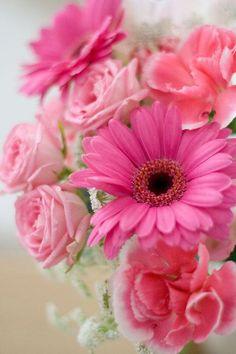 ピンクの花束 | 植物 > 花・花びらの写真 | GANREF