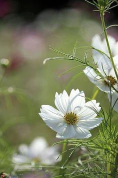 ♔ romantic flowers